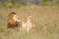 South Africa Eastern Cape Lions