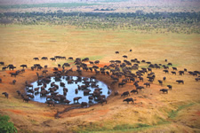South Africa Krugar Waterhole